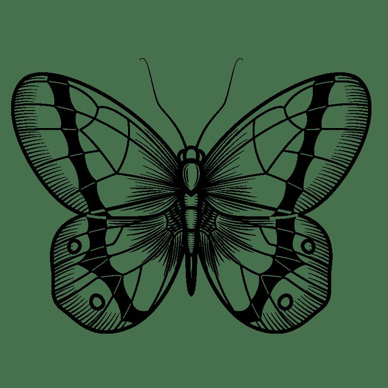 Mariposas para colorear - 10