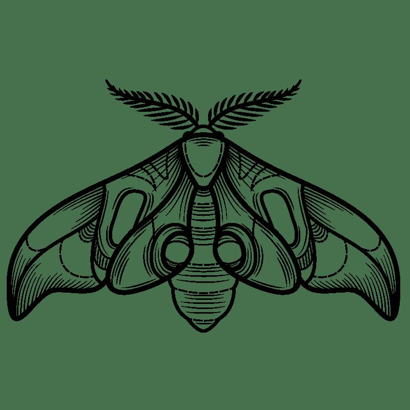 Mariposas para colorear - 13